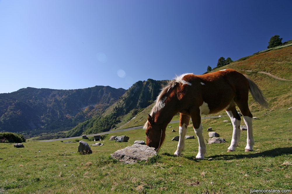 Moar Baby Horse